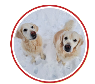 Sadie and Dugan golden retrievers at Riverview