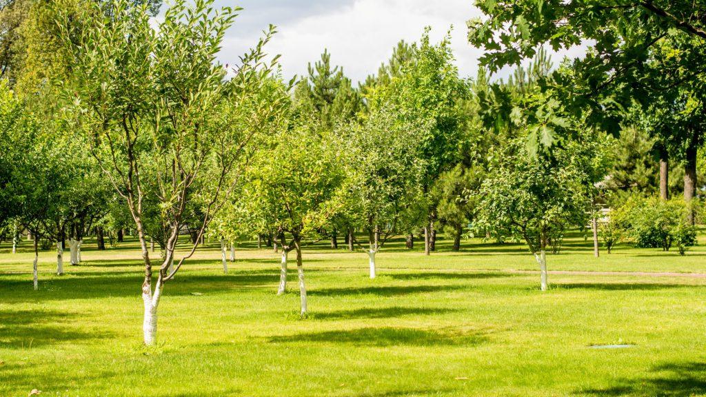 A park full of saplings in the summer, taken by Riverview Senior Living Community